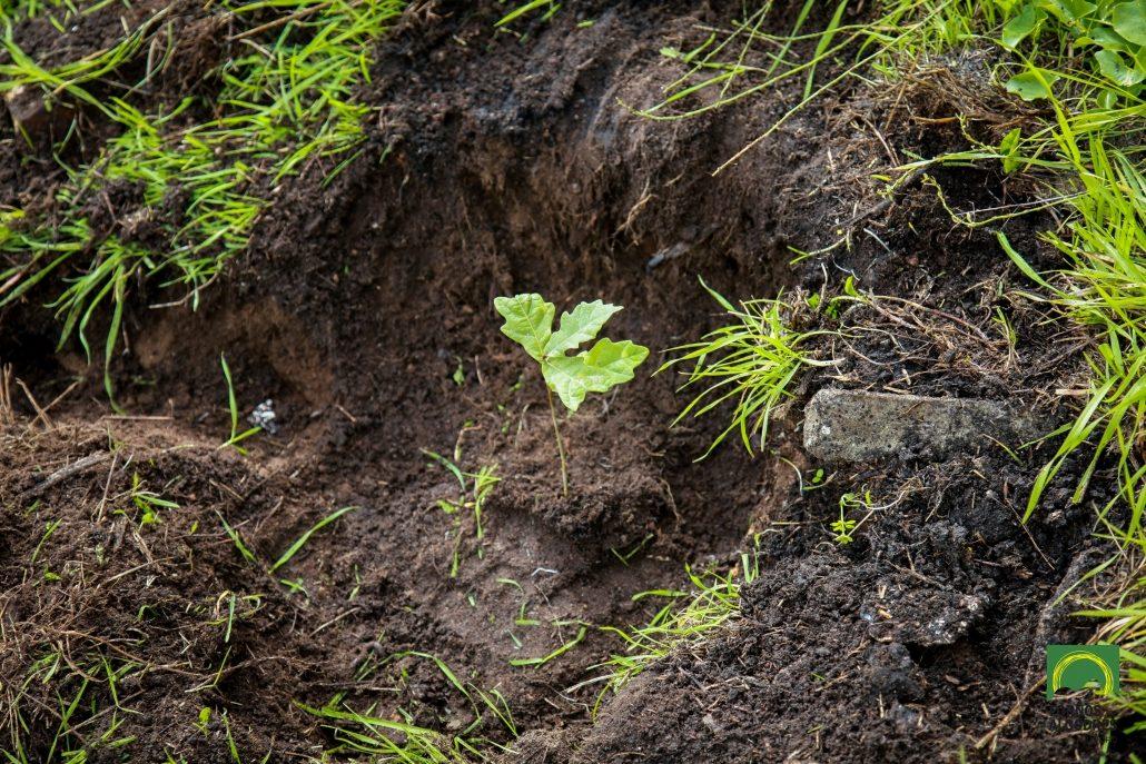 Dia Floresta Autóctone 2019
