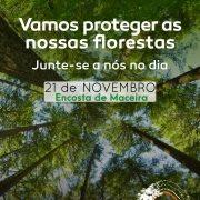 Reflorestação 21 novembro 2019
