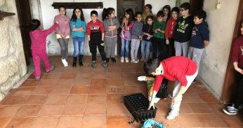 Sementeira de Bolotas nas Escolas de Fornos de Algodres