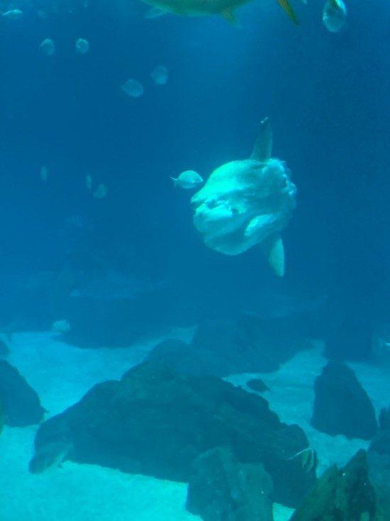Visita ao Oceanário.