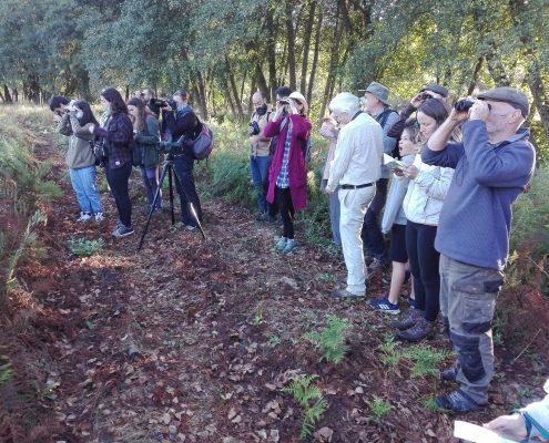 Observação de Aves - Conhecer Fornos de Algodres